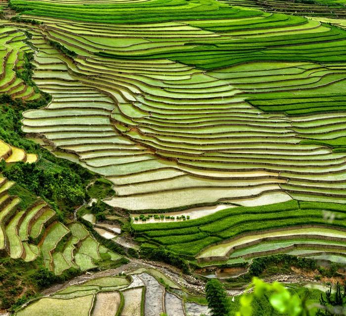 Carta da parati campo di riso su terrazze in montagna for Carta da parati per casa in montagna