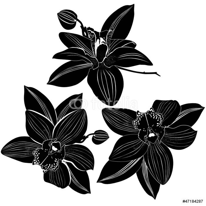 Vinylová Tapeta Orchideje květiny je izolovaný - Květiny