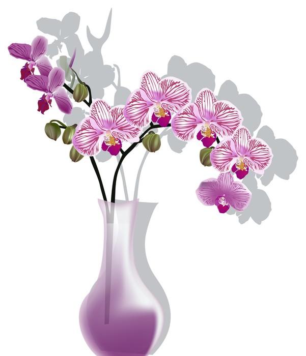 leinwandbild rosa orchidee blumen in der vase isoliert auf wei pixers wir leben um zu. Black Bedroom Furniture Sets. Home Design Ideas