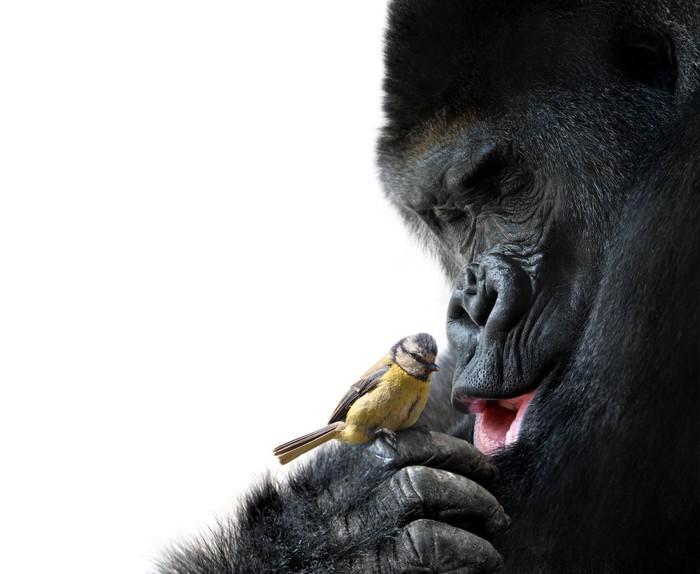 Cuadro en Lienzo Gorila que muestra el amor de la familia a un ...