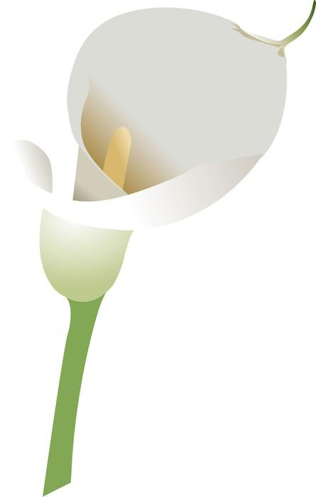 Vinylová Tapeta Calla - Květiny