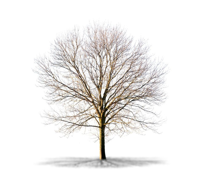 arbre sans feuilles sur fond blanc pixerstick sticker seasons - Arbre Sans Feuille