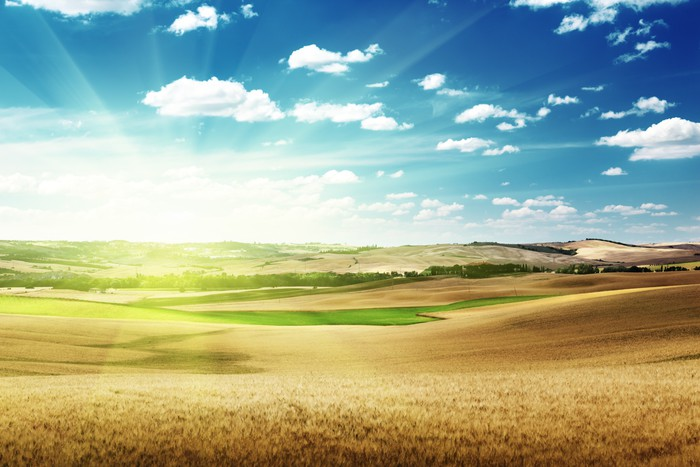 hills of barley in Tuscany, Italy Vinyl Wallpaper - Seasons