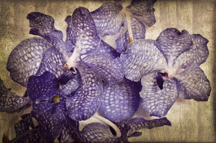 Vinylová Tapeta Vanda Orchideje, vintage styl - Květiny