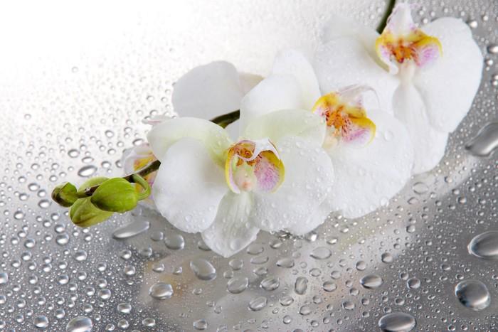 fototapete wei e orchideen mit tropfen pixers wir. Black Bedroom Furniture Sets. Home Design Ideas