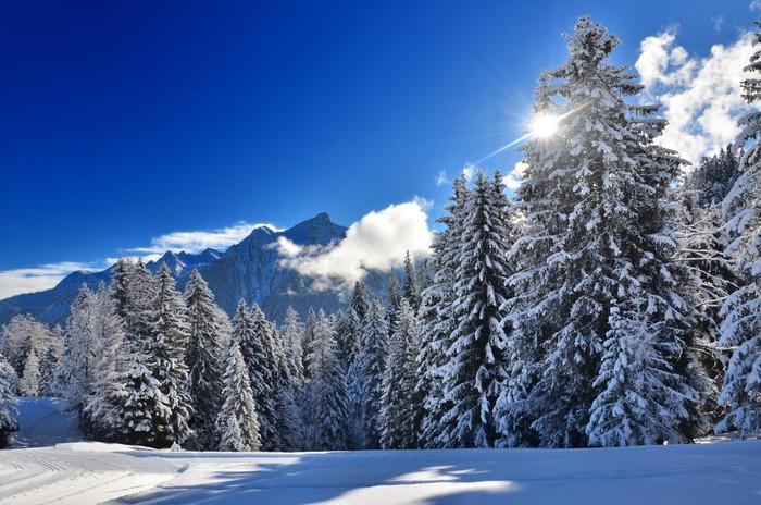 Vinylová Tapeta Snowy borovice lesní - Témata