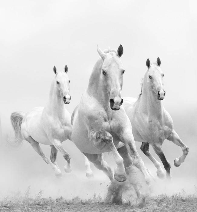 Papier peint chevaux blancs dans la poussi re pixers - Papier peint chevaux pour chambre ...