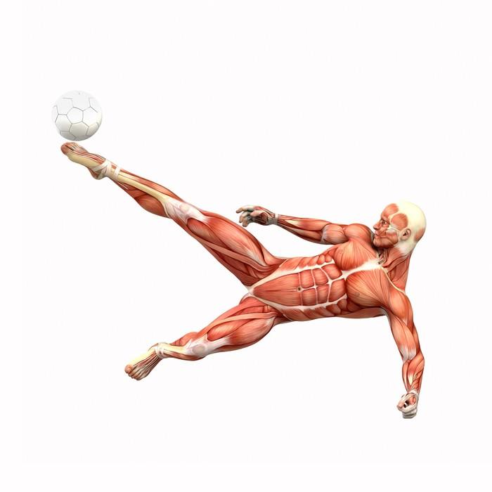 Aufkleber Fussballspieler Fallrückzieher Muskel Anatomie • Pixers ...