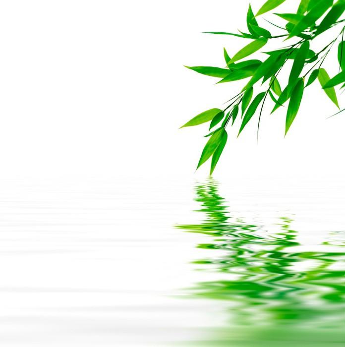 Vinylová Tapeta Bambusové větve dotýkají vodu - Rostliny