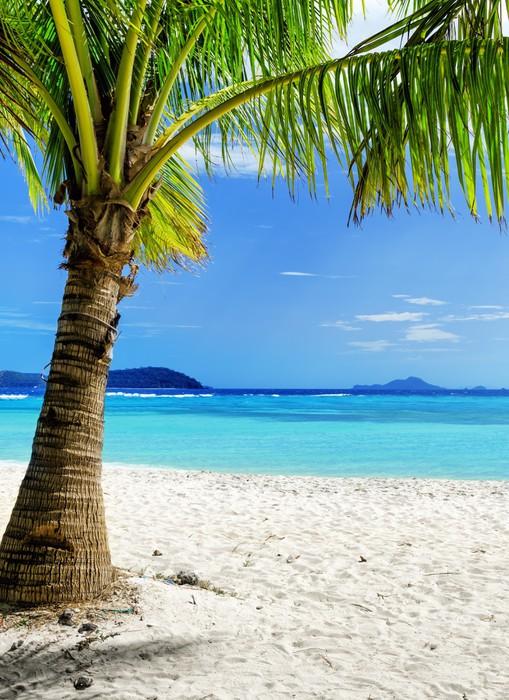 Vinylová Tapeta Zelený strom na bílé písčité pláže - Prázdniny