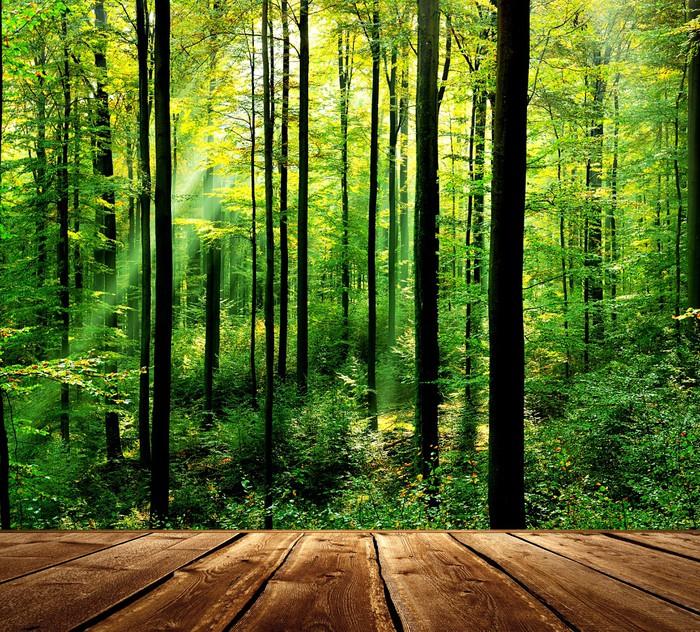Vinylová Tapeta Čerstvý zelený les s paprsky a dřevěnou podlahou - Témata