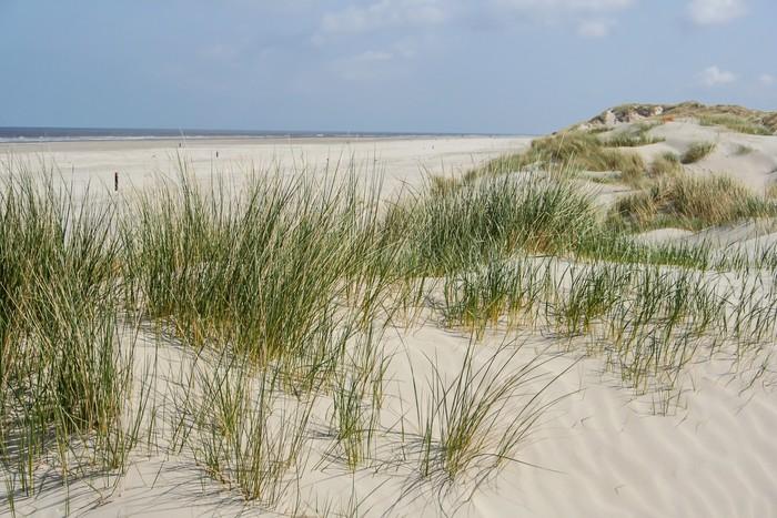 tableau sur toile les dunes de sable de la c te des pays bas pixers nous vivons pour changer. Black Bedroom Furniture Sets. Home Design Ideas