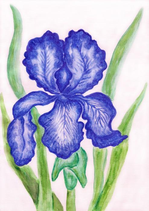 Vinylová Tapeta Tmavě modré iris, natírání - Umění a tvorba