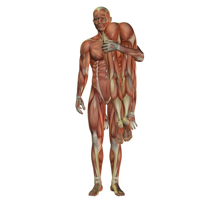 Fototapete Mann trägt Frau - menschlichen Muskulatur • Pixers® - Wir ...