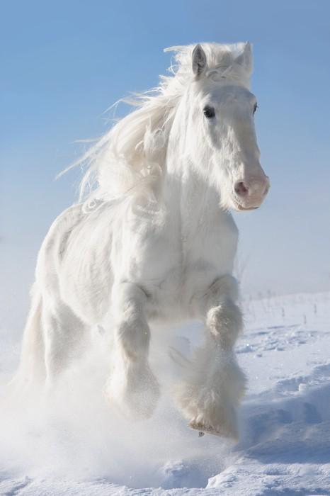 Клички для лошадей подбираем красивые имена кобылам и