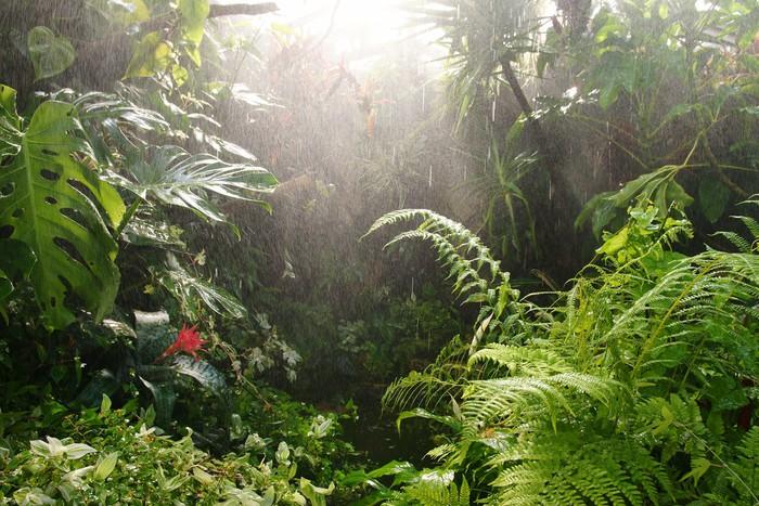 Vinylová Tapeta Tropický deštný prales. - Příroda a divočina