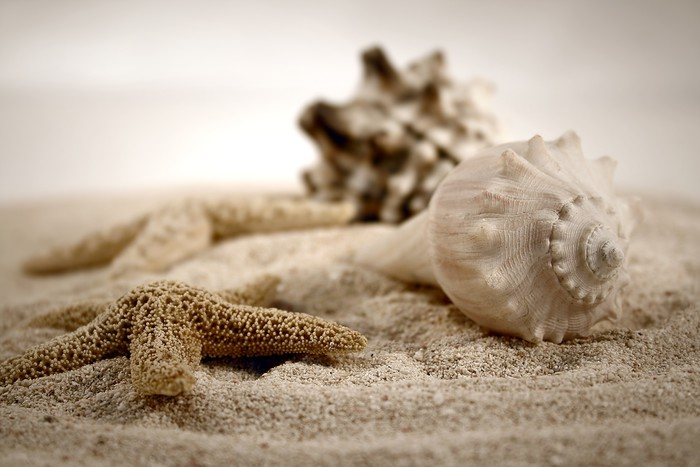 Tableau sur Toile Coquillages sur le sable - iStaging