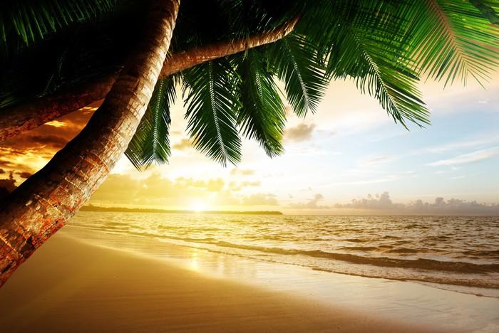 fototapete sonnenaufgang am strand der karibik pixers wir leben um zu ver ndern. Black Bedroom Furniture Sets. Home Design Ideas