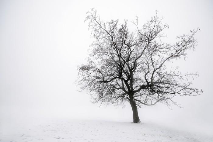 Mural de Parede em Vinil Winter tree in fog - Temas