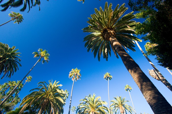 papier peint californie palmiers pixers nous vivons. Black Bedroom Furniture Sets. Home Design Ideas