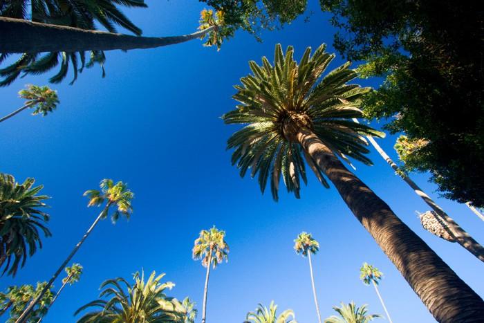 sticker californie palmiers pixers nous vivons pour. Black Bedroom Furniture Sets. Home Design Ideas