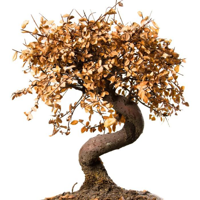 Vinylová Tapeta Mrtvý strom bonsai - Život