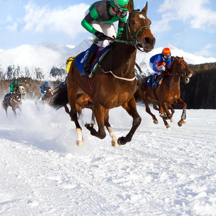 Vinylová fototapeta Dostihových koní ve sněhu - Vinylová fototapeta