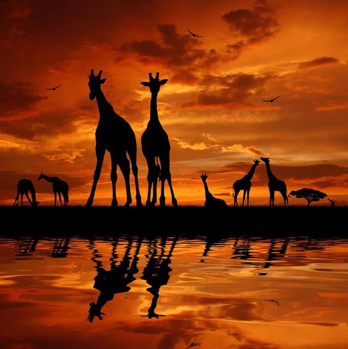 tableau sur toile troupeau de girafes au coucher du soleil pixers nous vivons pour changer. Black Bedroom Furniture Sets. Home Design Ideas