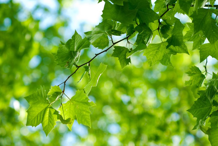 Vinylová fototapeta Foresta con foglie, Rami di alberi_03 - Vinylová fototapeta