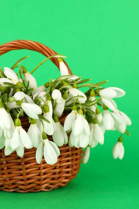 Vinylová Tapeta Jarní sněženka květiny v proutěném koši, na barevném pozadí - Květiny