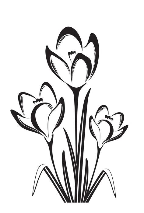 Fototapete Schwarz-Weiß-Zeichnung von Krokus • Pixers® - Wir leben ...
