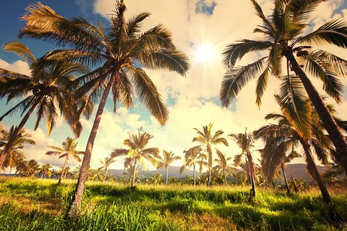 Vinylová Tapeta Palm plantáž - Zemědělství