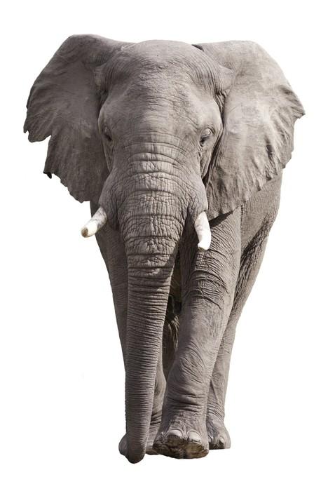sticker elephant isol sur blanc pixers nous vivons pour changer. Black Bedroom Furniture Sets. Home Design Ideas
