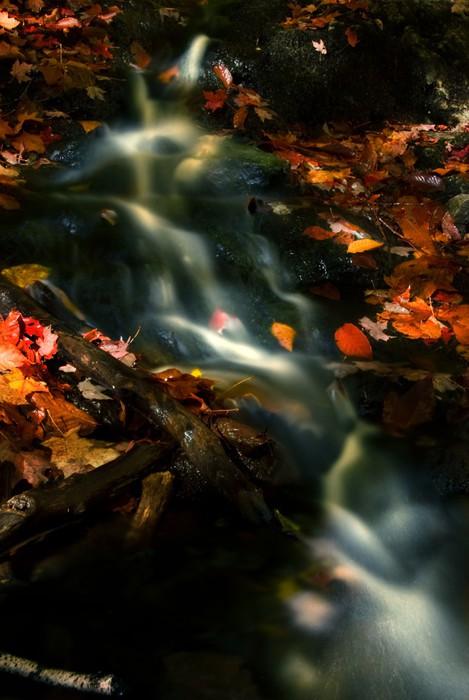 Vinylová Tapeta Podzimní Stream - Voda