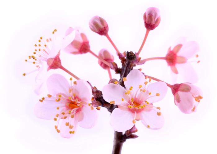 Carta Da Parati Fiori Rosa : Carta da parati fiori rosa fiori di u2022 pixers® viviamo per il
