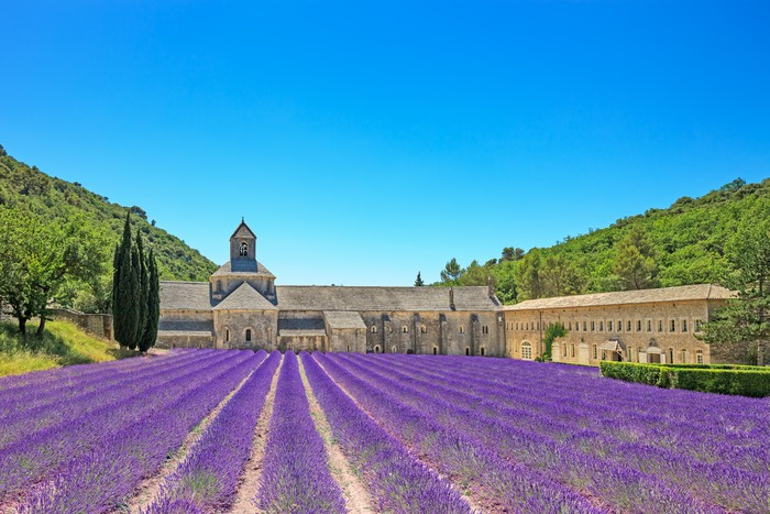 Abbey of Senanque blooming lavender flowers. Gordes, Luberon, Pr Vinyl Wall Mural - Themes
