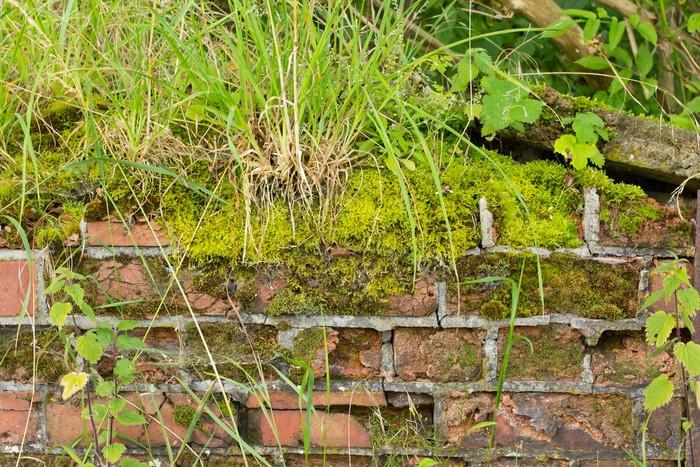 Vinylová Tapeta Mech a plevel se vztahuje rozpadající se zdi na pozadí - Abstraktní