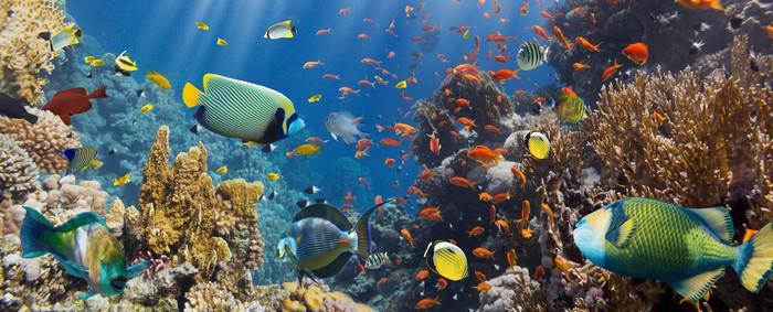 papier peint corail et poissons pixers nous vivons. Black Bedroom Furniture Sets. Home Design Ideas