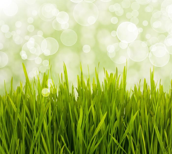 Vinylová Tapeta Jarní daisy pole. Velikonoční přání pozadí. - Květiny