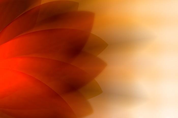 Vinylová fototapeta Abstraktní oranžové křivky pozadí. - Vinylová fototapeta