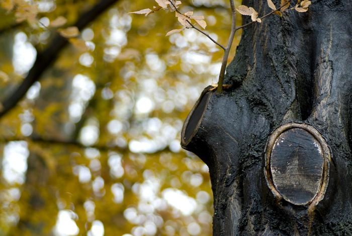 Vinylová Tapeta Tronc d'arbre en forêt avec deux větve coupées - Roční období