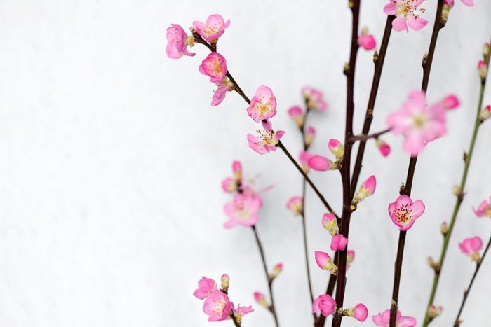 Vinylová Tapeta Spring flowers - Mezinárodní svátky