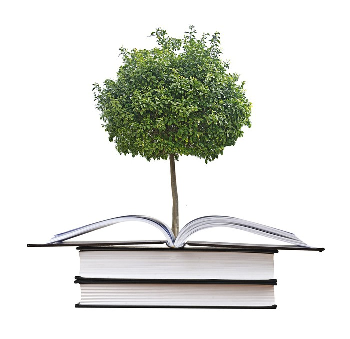 Citrus Tree Growing From Open Book Wall Mural • Pixers. Channel You Tube Banners. Escape Plan Signs Of Stroke. Ites Banners. Fashion Logo. Healthcare Technology Banners. Black Flag Canada Decals. Breakout Edu Signs Of Stroke. Deep Murals