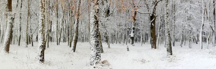 Vinylová Tapeta První sníh v lese - Mezinárodní svátky