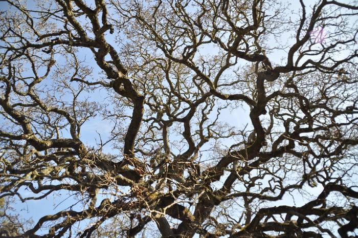 Vinylová Tapeta Odvětví - Stromy