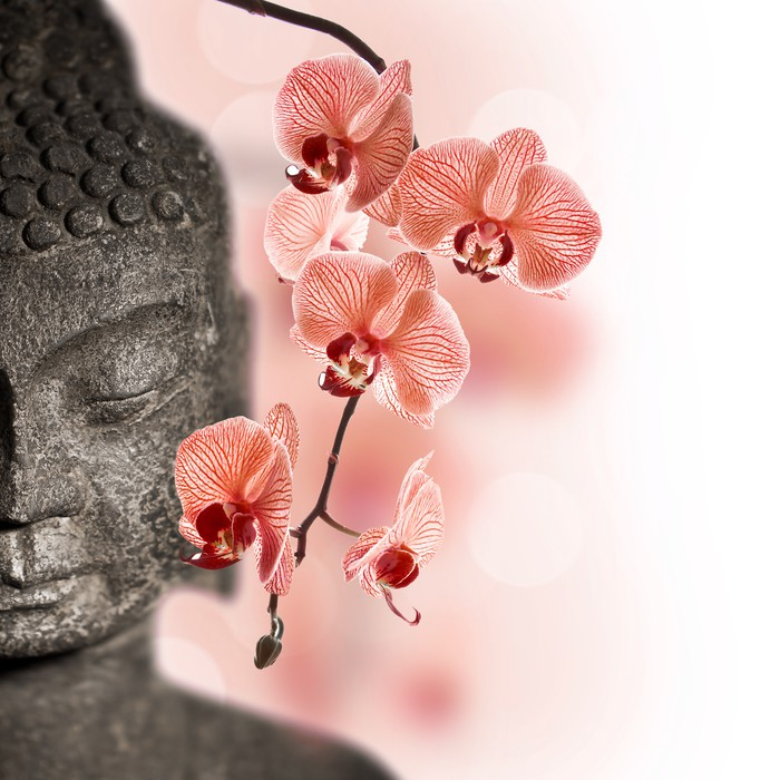 fototapete buddha und rote orchidee pixers wir leben um zu ver ndern. Black Bedroom Furniture Sets. Home Design Ideas