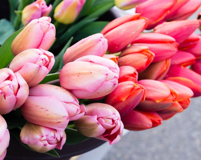 Vinylová Tapeta Tulipán květiny k prodeji na trhu - Květiny