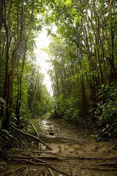 Fototapete tropischer regenwald  Fototapete Tropischer Regenwald Boden • Pixers® - Wir leben, um zu ...