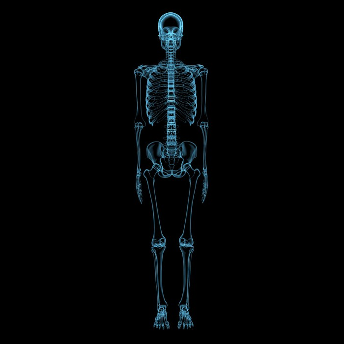 human skeleton 3d xray blue transparent wall mural pixers we