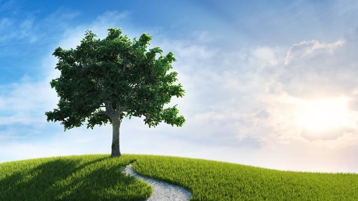 Vinylová Tapeta Západ slunce krajina - strom na kopci - Venkov